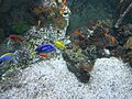 Fish in the aquarium at World Museum Liverpool (1).JPG