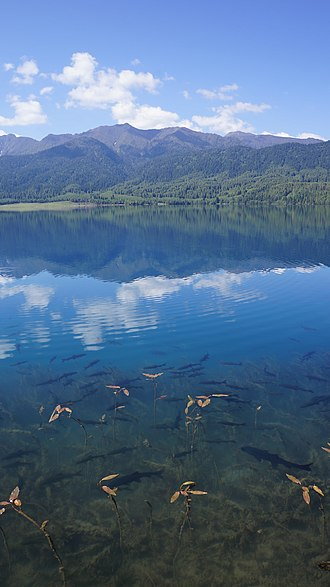 Rara National Park - Fishes seen in the clear water of Rara Lake