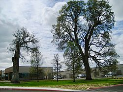 The five oaks that gave West Union its name