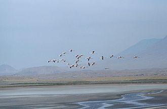 Southern Ewaso Ng'iro - Lesser flamingos over Lake Natron