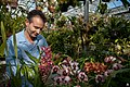 Flickr - USCapitol - Caring for Orchids at the U.S. Botanic Garden.jpg