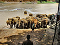 Flickr - ronsaunders47 - ELEPHANTS BATH TIME. 3 SRI LANKA..jpg