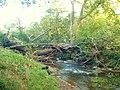 Flood debris in trees - geograph.org.uk - 1304319.jpg