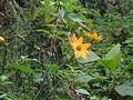 Flores naranjas 01.JPG