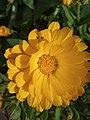 Flower1.2.jpg