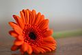Flower on the Floor (8016287605).jpg