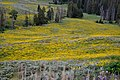 Flowered Valley (14842227305).jpg