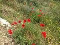 Flowers in Pantalica.jpg