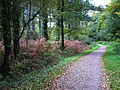 Footpath in Creech Woods - geograph.org.uk - 1021802.jpg