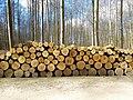 Forêt de Soignes --.jpg