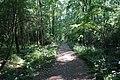 Forêt domaniale de Bois-d'Arcy 63.jpg