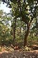 Forest - Budhibili - Dandadhar Road - Dhenkanal 2018-01-25 9645.JPG