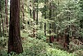 Forest Scenery, Rogue River-Siskiyou National Forest (36275284404).jpg