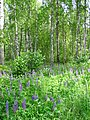 Forest at Edge of Khatyn National Memorial Complex - Near Minsk - Belarus (26973506263).jpg