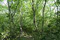 Forest in Mt.Nandai 11.jpg