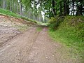 Forest track through larch - geograph.org.uk - 1303501.jpg