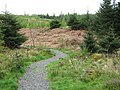 Forest walk near Laurieston - geograph.org.uk - 1373700.jpg
