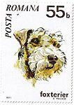 Fox-Terrier-Canis-lupus-familiaris Romania 1971.jpg