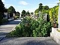 Friedhof Groß-Jedlersdorf Biodiversität sl7.jpg
