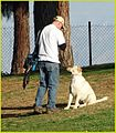 Frisbee Dog, Ford Park 1-19-14 (12226983266).jpg