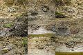 Frog mix) (23949216104).jpg