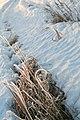 Frosty Path (3266716320).jpg