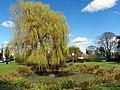GOC Willian & Weston Hills 073 Weston village pond (20730489800).jpg
