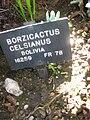 Gardenology.org-IMG 2377 hunt0903.jpg