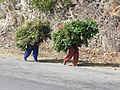 Garhwali women carrying fodder AJT Johnsingh.JPG