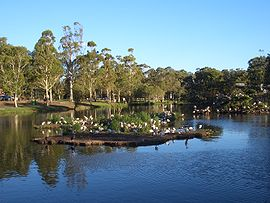 Georges Hall Lake Gillawarna 1.JPG