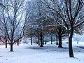 Georgia snow IMG 6084 (27147357359).jpg