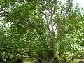 Giardino di Ninfa 142.jpg