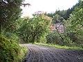 Glenbranter forestry walk - geograph.org.uk - 235200.jpg