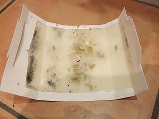 Mouse trap glue board