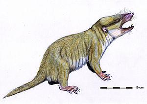 Holotheria - Life restoration of a Gobiconodon