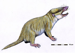 Holotheria infraclass of mammals