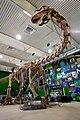 Gondwana-praehistorium-eingangshalle-argentinosaurus.jpg