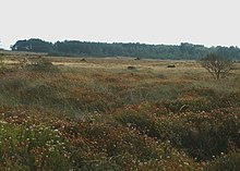Goonhilly Downs - geograph.org.uk - 1003656.jpg
