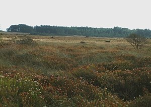 Goonhilly Downs - Image: Goonhilly Downs geograph.org.uk 1003656