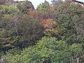 Gorno bosco 2.jpg