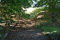 Grabhügel in den Hademarscher Bergen NIK 4228.JPG