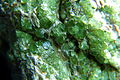 Granat, demantoid w azbeście - Campo Franscia, Lanterna Valley, Malenco Valley, Prowincja Sondrio, Lombardia.jpg