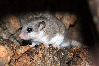 taxon of mice, humans, their most recent common ancestor, and all descendants