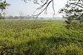 Grass and Water Hyacinth - Santragachi Lake - Howrah 2013-01-25 3578.JPG