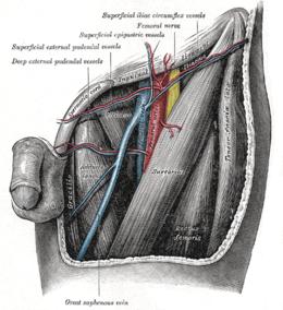 In totale su una trombosi di vena thrombophlebitis e il loro trattamento