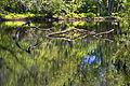 Great Meadows National Wildlife Refuge 2011-06-21 a.jpg
