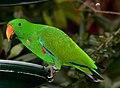 Green Parrot in Australia Zoo-01+ (1915603370).jpg
