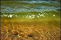 Green wave - panoramio.jpg