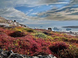 Tundra bei Sydkap, Kangertittivaq (Ost-Grönland)