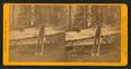 Grizzly Giant,33 feet diameter, Mariposa Grove, Mariposa County, Cal, by John P. Soule.png
